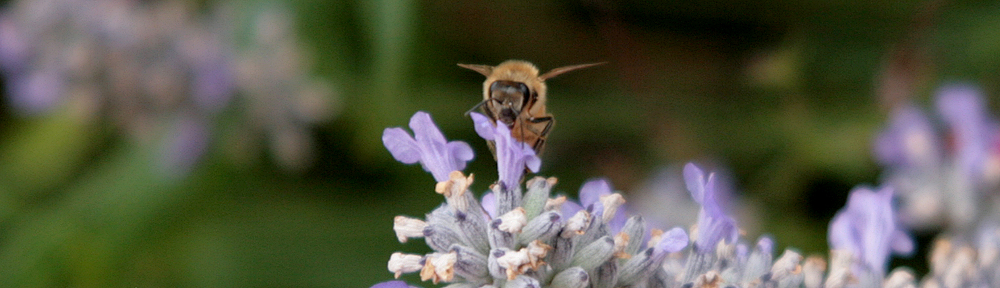 Bee Rancher BUZZ
