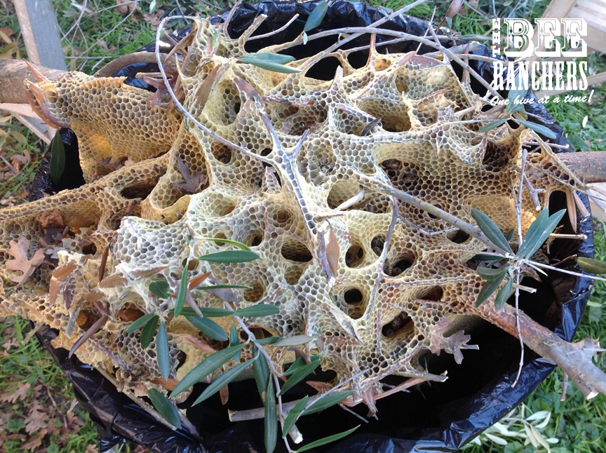 Natural bee hive removal in Narrabundah - General ...  Natural Beehives